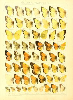Macrolepidoptera15seit 0063.jpg