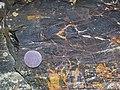 Magnetite-rich banded iron-formation (BIF) (Michipicoten Iron-Formation, Neoarchean, 2696-2749 Ma; Route 17 roadcut east of Bridget Lake, south of Wawa, Ontario, Canada) 1 (48268670946).jpg