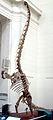 Mamenchisaurus adolescent.jpg