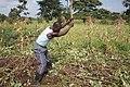 Man working in the farm.jpg
