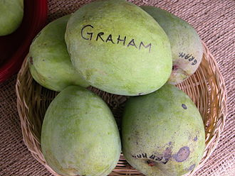 Graham (mango) - Display of unripe Graham mangoes at the Tropical Agricultural Fiesta in the Fruit and Spice Park in Homestead, Florida.
