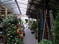 Marché aux fleurs et aux oiseaux de Paris 2010-07-29 n3.jpg