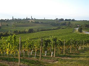 Međimurje County - Wineyards of Železna Gora