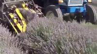 File:Metalagro Lavandula Harvest Machine Low.webm