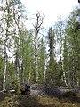 Metsää Aitaojan alajuoksulla 2020.jpg