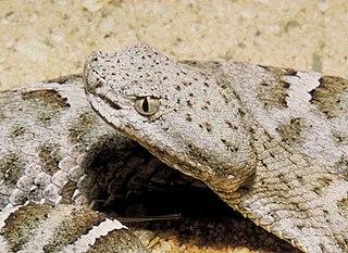 Snake venom - WikiVividly