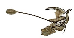Microraptor fossil1 white background.JPG