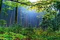 Miesbacher Forst.jpg