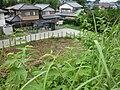 Minakuchijo12.jpg