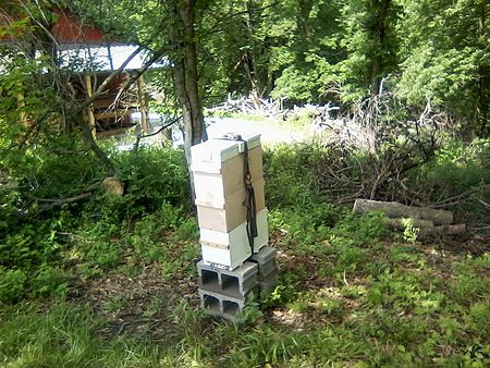 A modwarré hive with an added box.