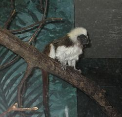 MonkeyScieMuseum25June07.jpg