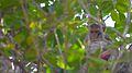 Monkey resting in Trivandrum zoo.jpg
