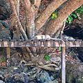 Monkeys at Ao Nang beach (12359774393).jpg