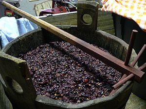 Must - Grapes being pressed to create must.