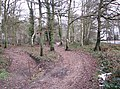Motorcycle tracks in Broom Covert - geograph.org.uk - 1637465.jpg