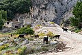 Mountain goats on the island of Zakynthos (45556580125).jpg