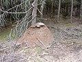 Mraveniště u Kačleh.jpg