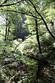 Muir Woods National Monument 2010 02.JPG