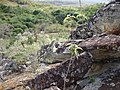 Muita pedra - panoramio.jpg