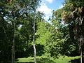 Mundo Perdido pyramid 5C-54, east face, Tikal.jpg