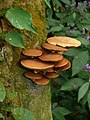 Mushroom Pakke unid 1.jpg
