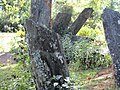 Mysterious Standing Stones of Hintang - panoramio (4).jpg