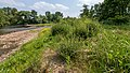 NSG Rurauenwald-Indemuendung FFH-Gebiet Indemündung Sandbank mit Ufervegetation VI.jpg