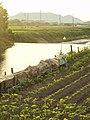 Nakadera, Mihama, Mikata District, Fukui Prefecture 919-1136, Japan - panoramio.jpg