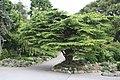 National Botanic Garden,Dublin,Ireland - panoramio (31).jpg