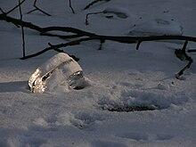 Natural ice cube.JPG