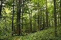 Nature reserve Žižkův vrch in summer 2012 (22).JPG