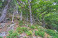 Naturschutzgebiet Feldberg (Black Forest) - Alpiner Steig am Feldberg - Bild 05.jpg