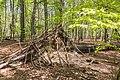 Naturschutzgebiet Königsdorfer Forst-7287.jpg