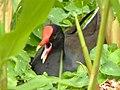 Nest Sitting (17348573966).jpg