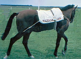 Nijinsky (horse) Canadian-bred Thoroughbred racehorse