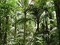 Nikau Reserve, Paraparaumu.jpg