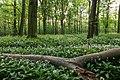 Nordkirchen, Naturschutzgebiet Ichterloh -- 2018 -- 2295.jpg