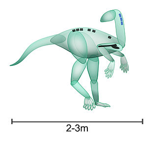 Nyasasaurus - Approximation of animal based on partial skeleton shown in black (first specimen, six vertebrae and a humerus) and blue (second specimen, three cervical vertebrae).