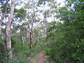 OIC Margaret River bush 1.jpg