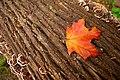 O Canada (2900628952).jpg