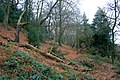 Ockbrook Wood - geograph.org.uk - 1108540.jpg