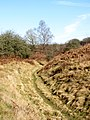Old Leat (^) to the Foundry - March 2012 - panoramio.jpg