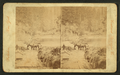 On the Clackamas River, Oregon, by Continent Stereoscopic Company 2.png