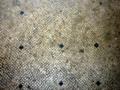 Oplontis 49.PNG