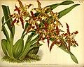 Orchid album (PL 390) (8577835126).jpg