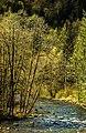 Oregon Wild (35106565064).jpg