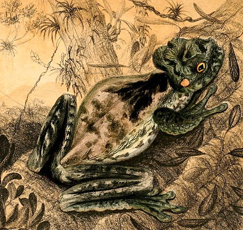 500px osteopilus crucialis 1888