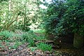 Overgrown track off Tower Rd - geograph.org.uk - 1289451.jpg