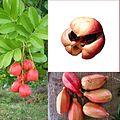 Owoce Aka.jpg
