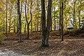 Pörtschach Halbinsel Buchenwald an Promenade 28102017 1763.jpg